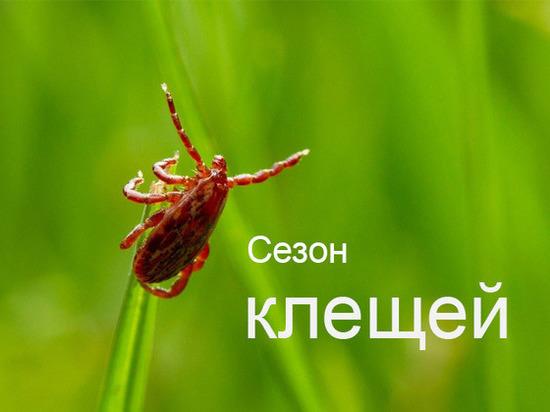 Росгосстрах рекомендует ставропольцам обеспечить себя защитой от укуса клещей