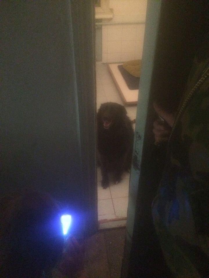 Тайная версия отравления Скрипалей: сестра Юлии рассказала о завещании