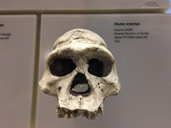 Предки людей освоили прямохождение задолго до того, как покинули деревья