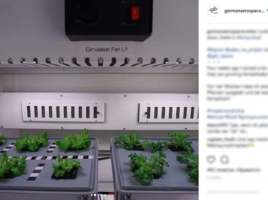 В Антарктиде впервые собрали урожай свежих овощей