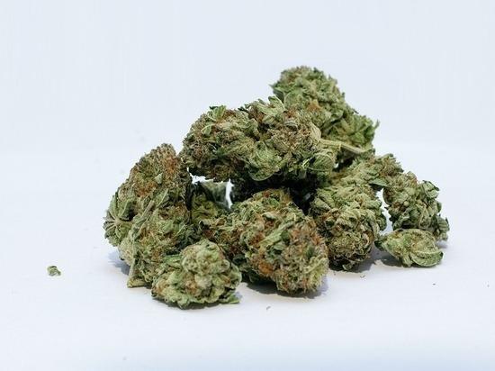 Житель Карелии выращивал марихуану на даче из-за дороговизны покупного «зелья»