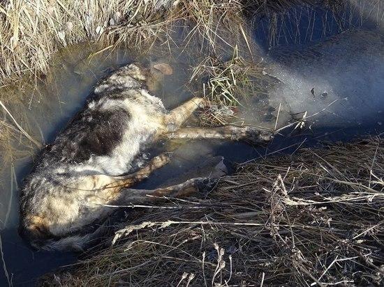 Рядом с Таллинским шоссе найдены тела шести мертвых собак