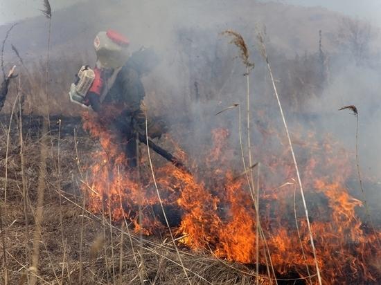 Землю леопарда отстояли у огня