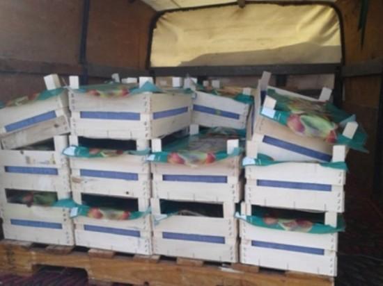 В Оренбурге 22 ящика польских груш переработали в биогаз