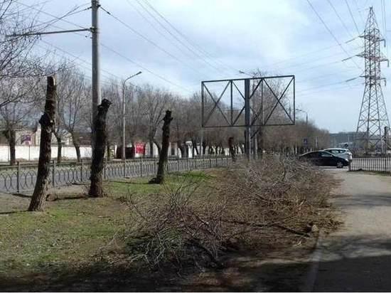 В Астрахани ради рекламы спилили десятки деревьев