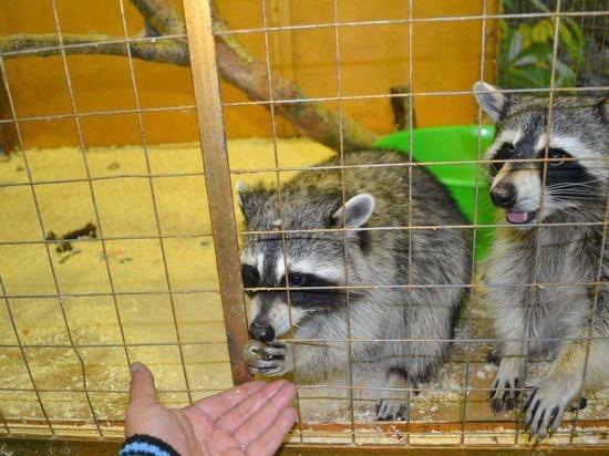 Запретить контактные зоопарки и передвижные зверинцы потребовали на митинге в Екатеринбурге