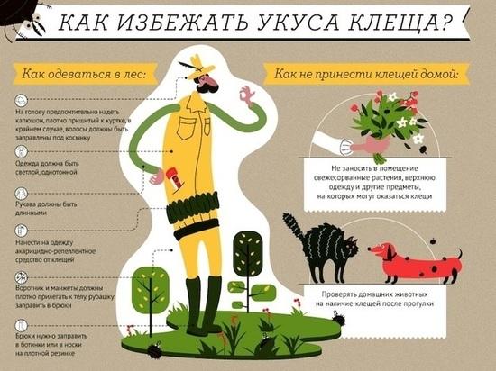 ВХабаровском крае участились случаи нападения клещей налюдей