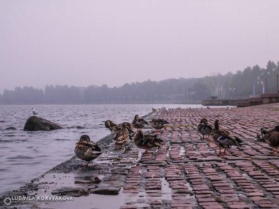 Мы очень загрязняем озеро: за это будем дополнительно платить