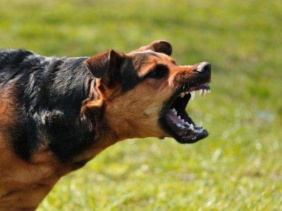 ВСамарской области резко участились случаи бешенства среди животных