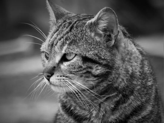 Мертвого кота отдали на экспертизу, чтобы доказать вину его хозяина