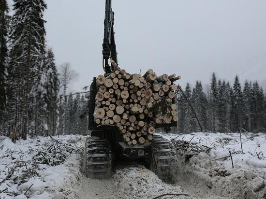 Экологи, лесопромышленники и руководство Архангельской области определили правила игры вВерхнеюловском заказнике