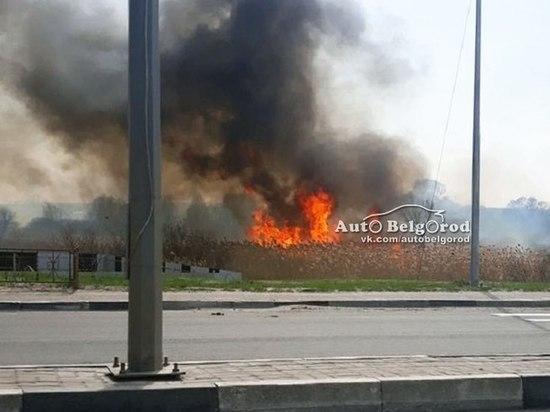 В Белгородской области горят поля
