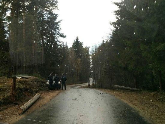 Под Тверью ураган повалил дерево на проезжающий автомобиль