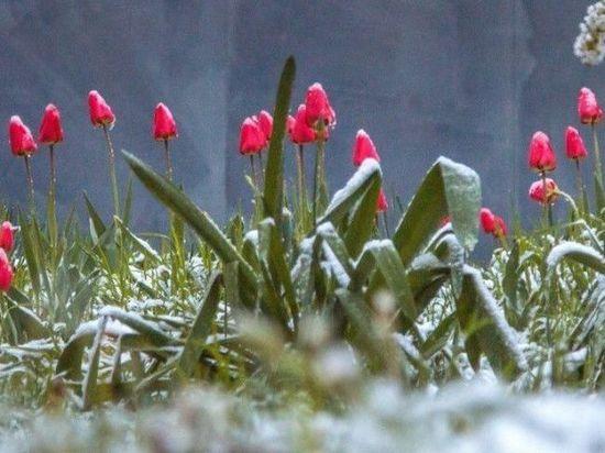 Ссамого начала недели в областях СКФО ожидаются заморозки