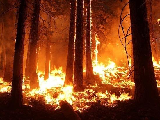 Югорчане смогут сообщить о пожаре через мобильное приложение