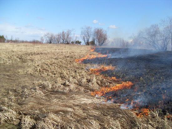 За поджог травы туляков наказывают рублем