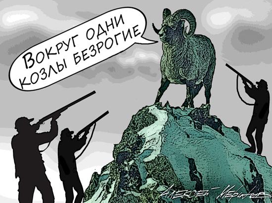 """Российским богачам нужны рога: путоранские бараны стали героями """"фильма ужасов"""""""