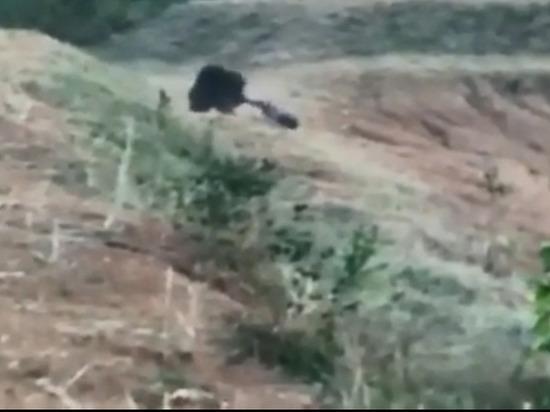 ВИндии раненый медведь задрал любителя селфи