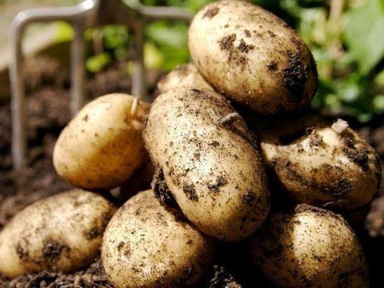 Власти отреагировали наинициативу самарского художника, посадившего картошку в уличных ямах