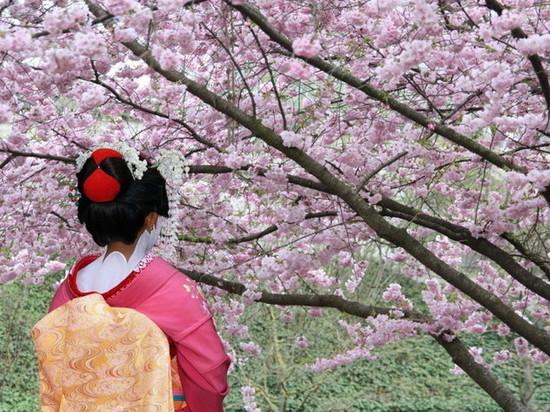 В Калмыкии цветет японская весна