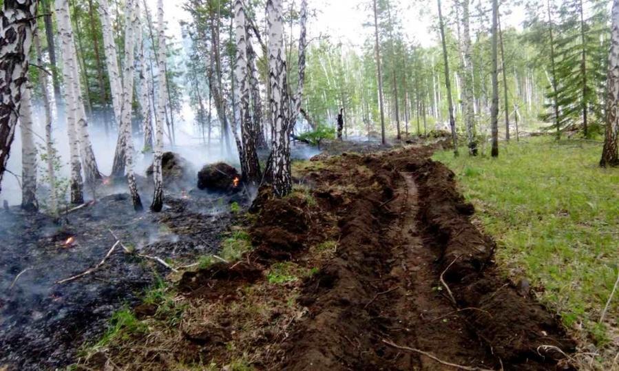 леса россии занимают большую часть кредит а банке восточный