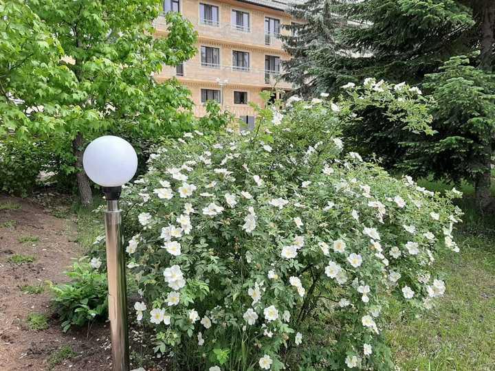 Территория бальнеокурорта Александра Удодова утопает в цветах и зелени