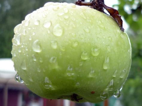 Яблоки омолаживают на 17 лет