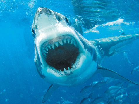 Акула доска объявлений в спб частные объявления о продаже автомобилей до 20000