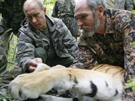 Тигрица Путина ненастоящая?