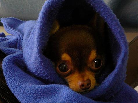 Алакай: прививка от бешенства для собак омск.