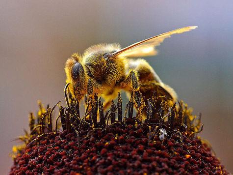 Пчелы иногда превращаются в душителей