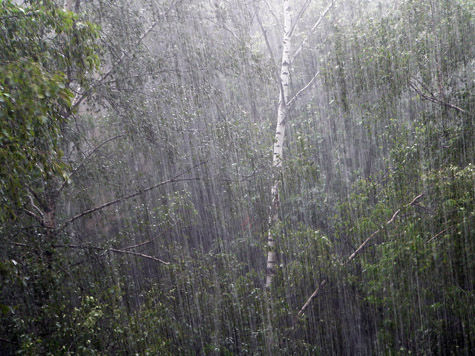 Обои для рабочего стола летний дождь