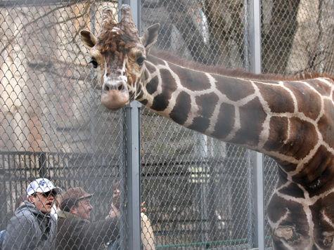 В Московском зоопарке отметят День города