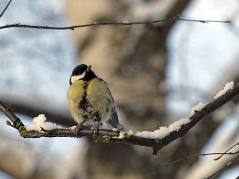Для птиц в Москве спрокетируют скворечники в стенах домах