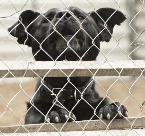 В Оренбурге собак убивают без счета