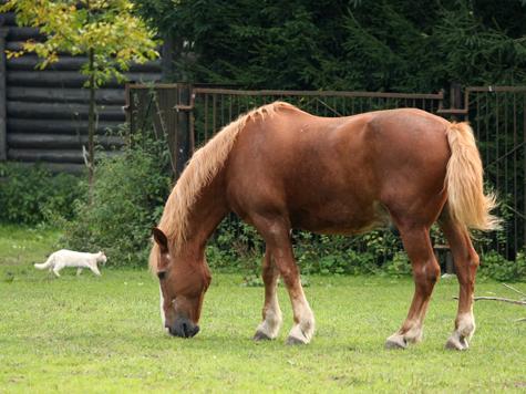 Жители Подмосковья умчатся в прошлое на лошади