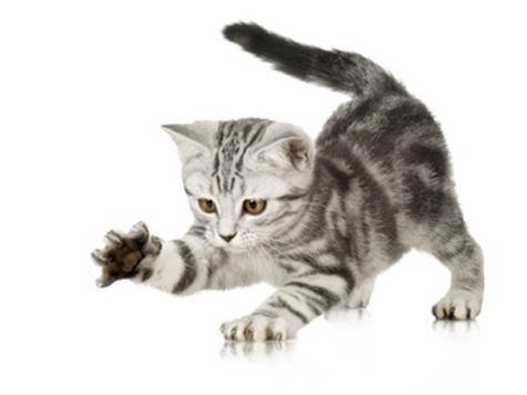 В Москве пройдет выставка бездомных кошек