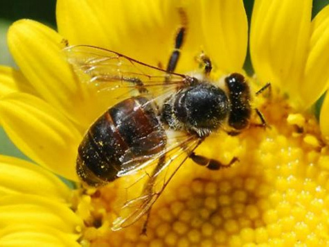 Улей начал гнить с пчел