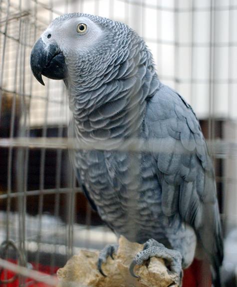 Судьи заглянули больному попугаю в клюв