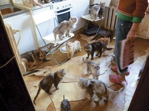 В одной комнате нашли 86 кошек, не считая трех собак
