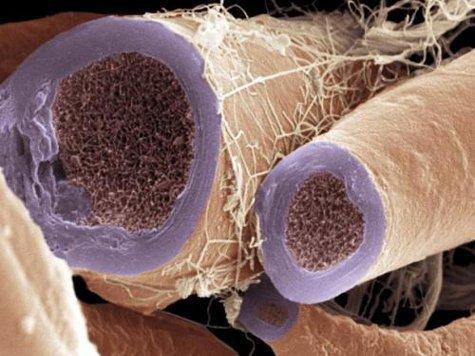 Ученые научились ремонтировать нервы