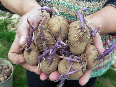 Заместителю городского главы не смогли простить увлечение картошкой
