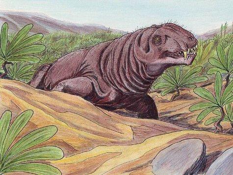 Впервые звероящеров Пермского периода обнаружили в Южной Америке