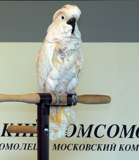 Аферист выуживал деньги из пенсионера с помощью попугая