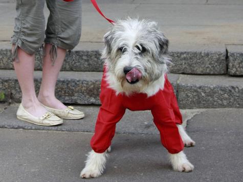 Первая в жизни собака