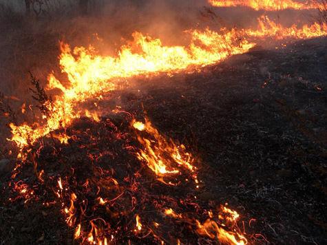 Пожар в новгородском интернате: могли сгореть 35 человек