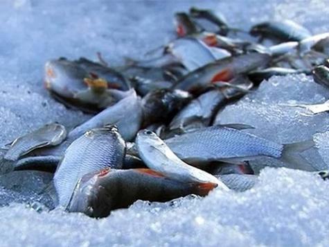 рыбалка на нельму зимой ямал