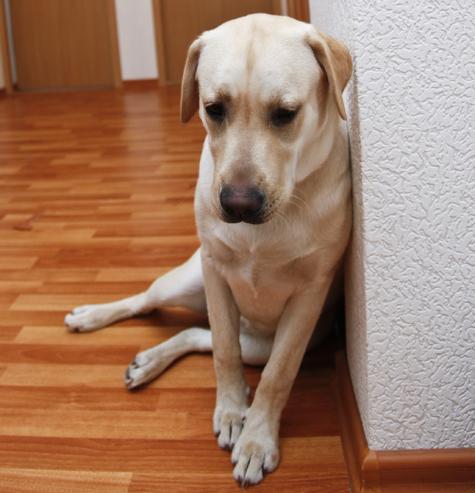 Чем отравить собаку в домашних условиях