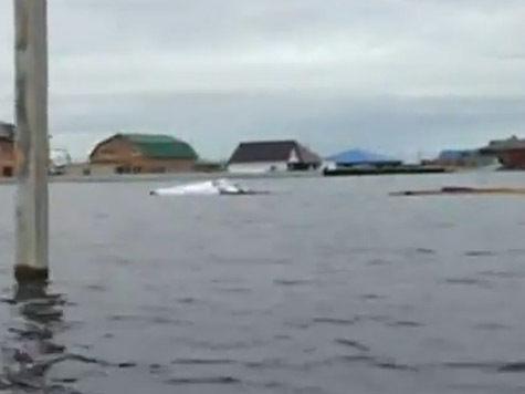 72-летний житель Приамурья несколько дней спасался от потопа на крыше