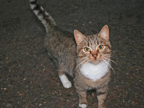 Общественники будут спасать московских кошек от жуткой смерти